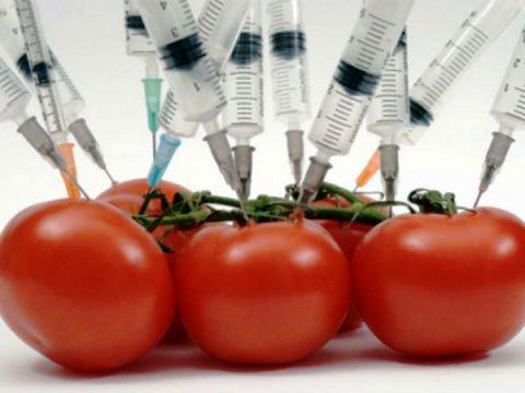 В Казани обсудят вопрос запрета ГМО в России