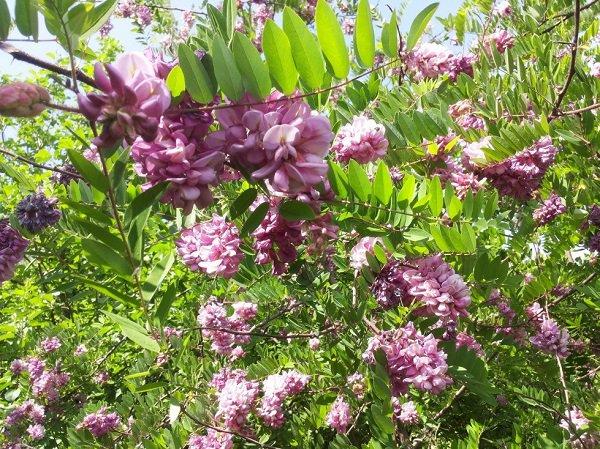 Дендрарий и оранжерея откроются в «Ботаническом саду» при Казанском университете