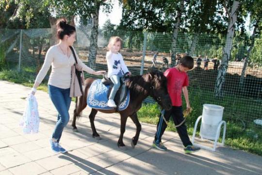 Казанские парки остались без лошадей