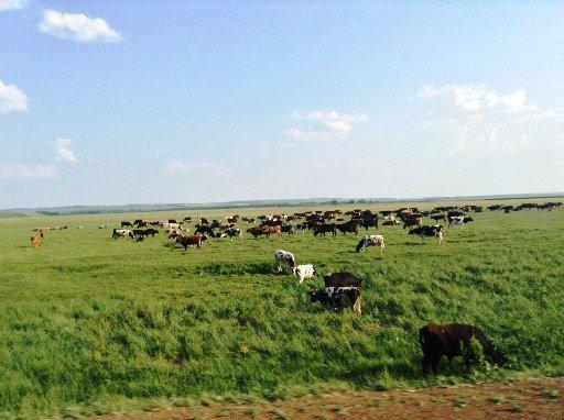 В Татарстане завели первое уголовное дело за растрату гранта, полученного на развитие фермерского хозяйства