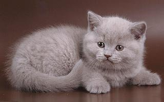 Всё о кошках и котах на dlyakota.ru
