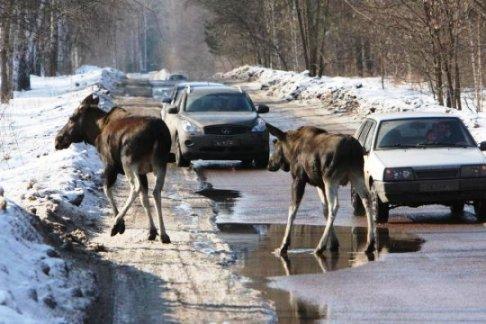 Диких зверей все чаще начали встречать на окраинах Казани