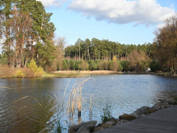 В парке «Сосновая роща» обустроят площадку для выгула собак