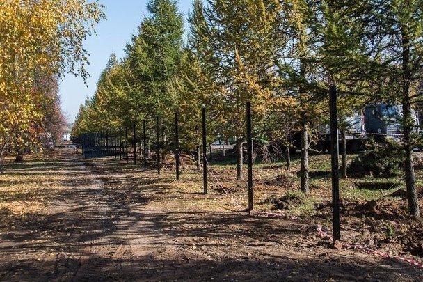 В Набережных Челнах появится парк на месте леса «Прибрежный»