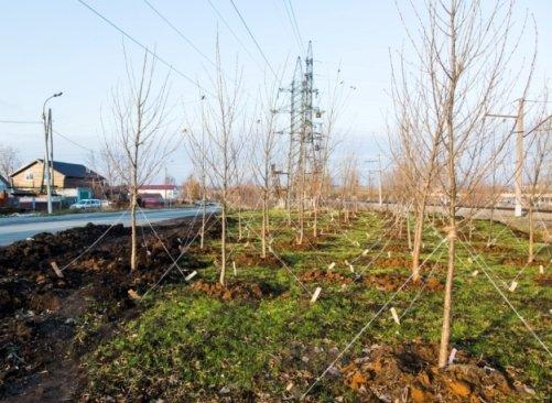 200 деревьев высадили в поселках Советского района