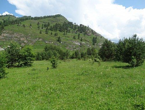 купить землю на Алтае