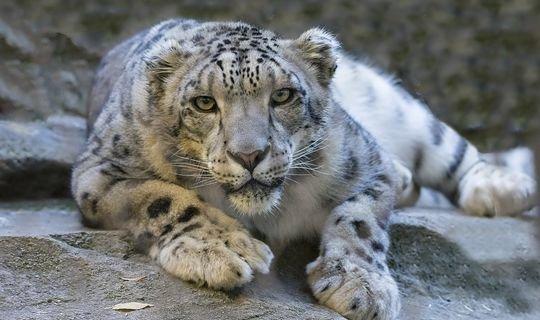 Диких кошек будут разводить в Камско-Устьинском районе
