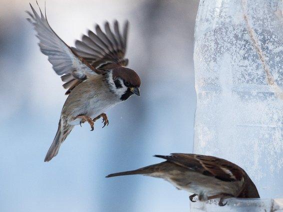 В Казани призывают кормить птиц