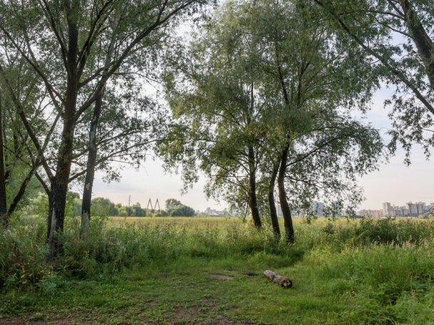 Экологи «БорщеVиктори» научат казанцев бороться с опасным сорным растением