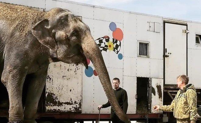 Двух слоних после инцидента в Казанском цирке перевезли в Крым
