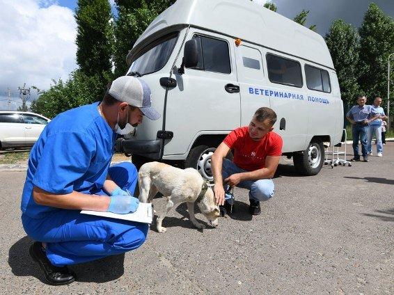Казанцы смогли бесплатно стерилизовать и вакцинировать своих собак