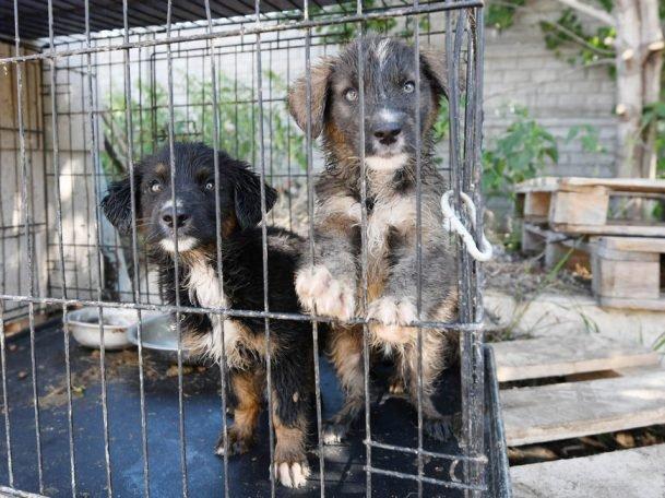 За неделю на единый номер по отлову бродячих собак в Казани поступило 500 заявок