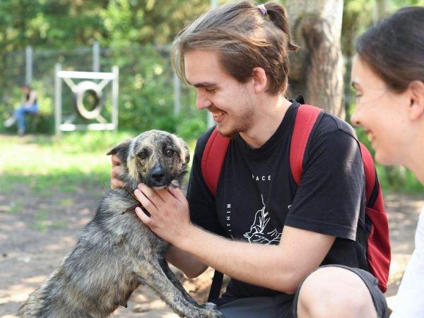На акции в Горкинско-Ометьевском лесу казанцы обрели четверолапых друзей
