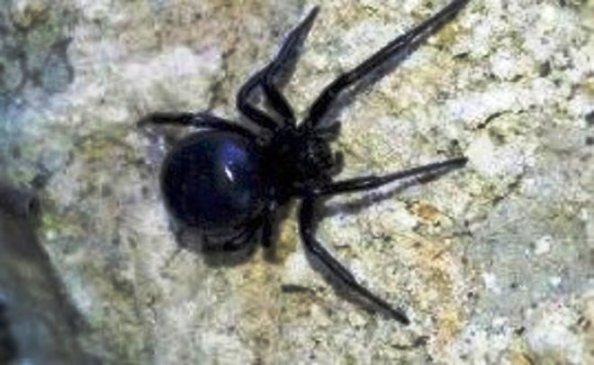 В казанском парке заметили ядовитого паука