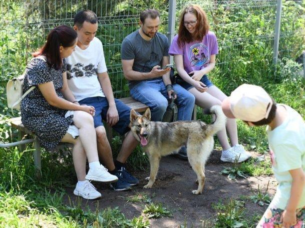 На фестивале «Дай лапу» казанцы смогут выбрать питомца из приюта